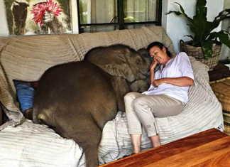 Moyo el elefante