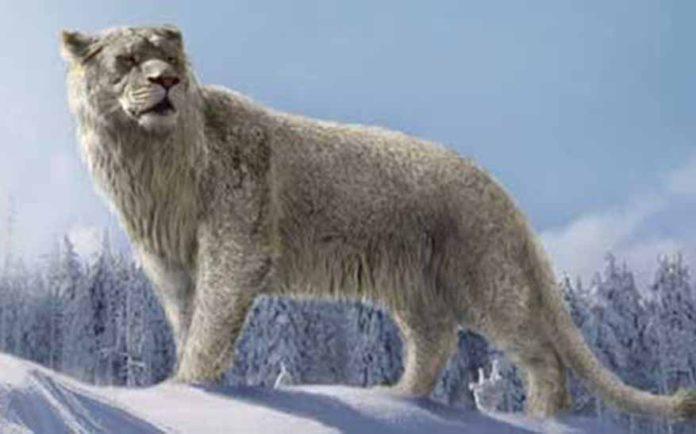 Panthera leo spelaea