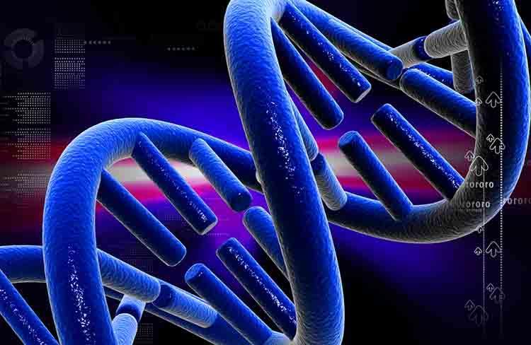 Científicos identifican el mínimo de genes necesarios para la vida