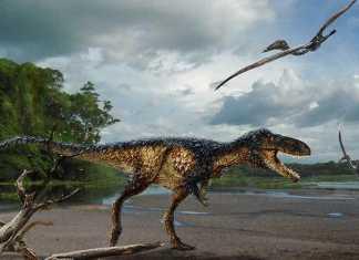 Descubierta nueva especie de Dinosaurio en Canada