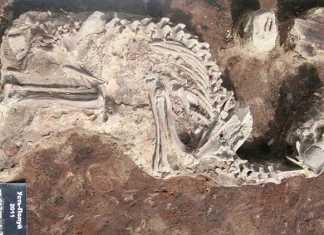 El vinculo perro-humano se remonta a la antiguedad - Restos de perro encontrado por el antropologo Robert Losey