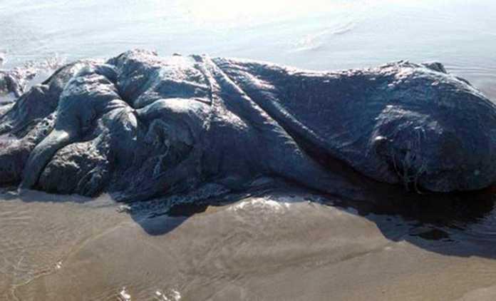 Hallado monstruo marino en las costas de Mexico