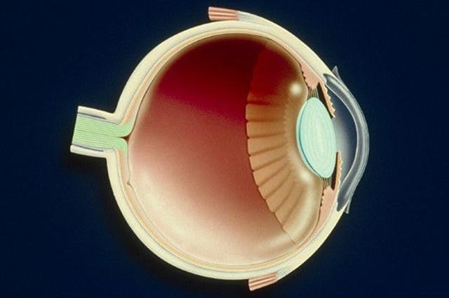 niños ciegos vuelven a ver con sus propias celulas madre