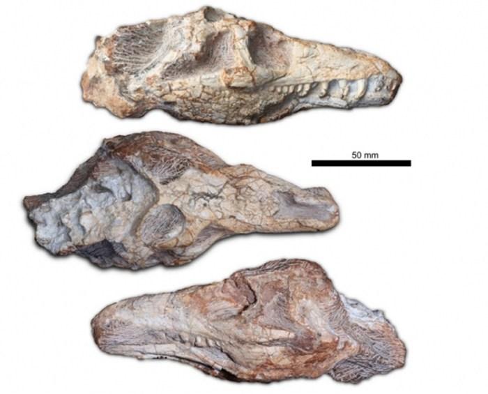 fosil reptil
