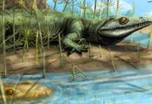 Teyujagua reptil