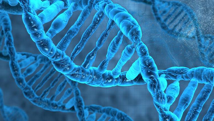 Retrovirus antiguo encontrado en el ADN humano