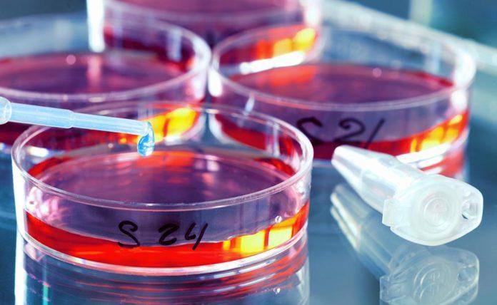 Científicos crean compuesto que erradica el ARN causante de una enfermedad incurable