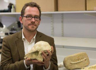 Las especies mamíferas casi aniquilan a los dinosaurios