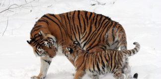 Las especies de animales en peligro de extinción más amenazadas