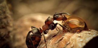 Cómo son y qué hacen las hormigas