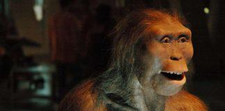 Quién es Lucy, la Australopithecus afarensis