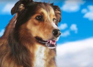 'Best Friend From Heaven' es el tráiler más raro del año