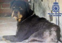 Candela, perra rescatada