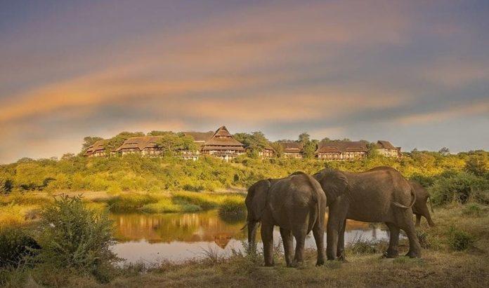 Dos turistas fallecen aplastados por un elefante cuando trataban de sacar fotografías