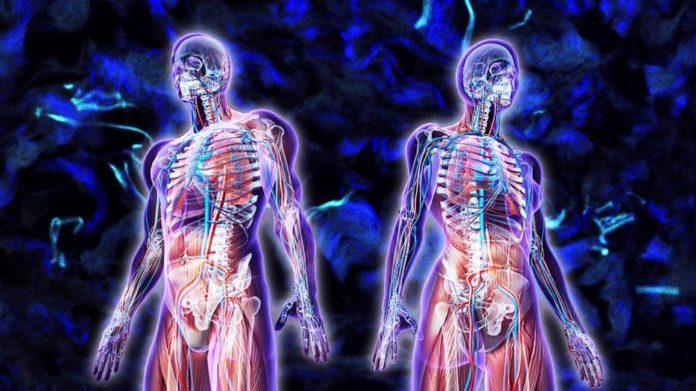 Nuevo órgano humano bajo la superficie de la piel, el 'intersticio'