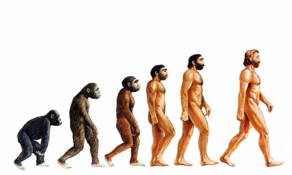 Estudio de fósiles influyó en Charles Darwin para desarrollar su teoría de la evolución