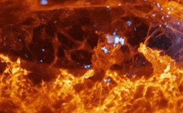 imágenes detalladas de células que se mueven a través de un organismo vivo